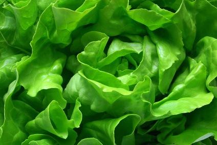 Lechuga: capital para la salubridad y propiedades nutricionales